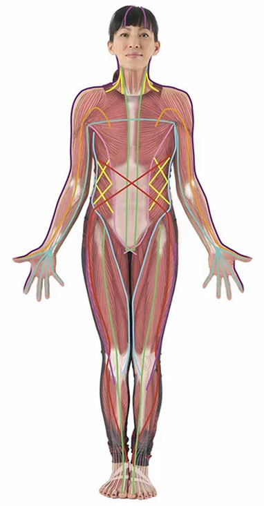 All About Fascia poster
